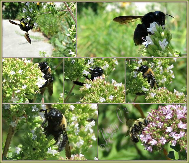 A bee-utiful day ..