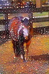 *rainy pony final