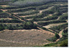 vineyards and stripes