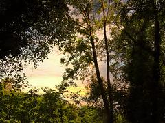 1 (26)...austria forest wald ..sunrise
