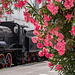 flowers and steam
