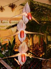 Ausgefallene Form einer Frauenschuhorchidee