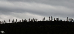 Pictures for Pam, Day 148: SSC: Tree Silhouettes