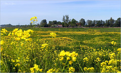 Meadow view in Yellow...