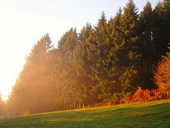 Brumes d'automne / Autumn mists (CLIC SUR PHOTO)