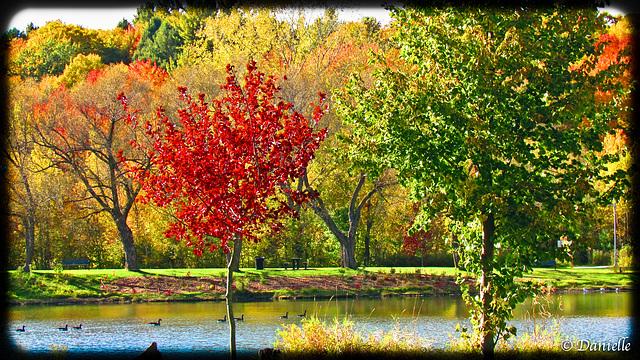**** Les délices de l'automne ***