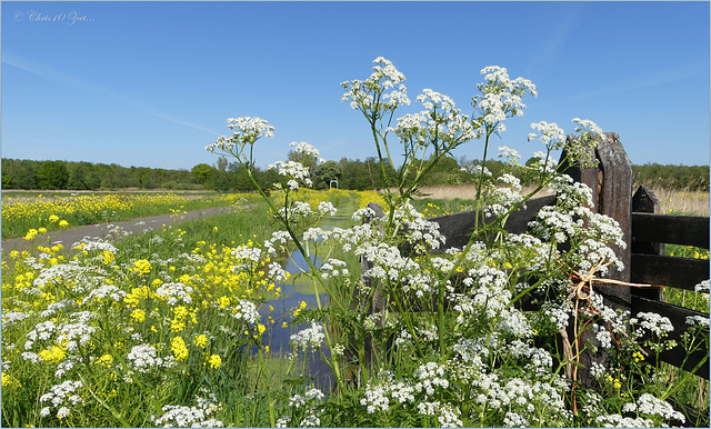 Meadow view in White and Yellow...