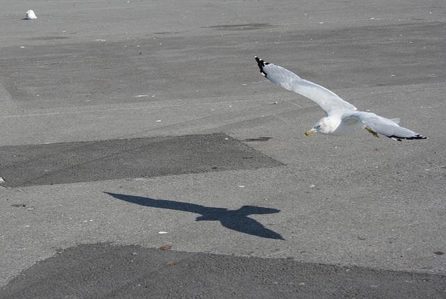 survoler son ombre / flying over his shadow
