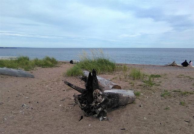 Vestige de plage / Beach remains