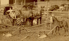 Horses, Cows, and Plows (Detail 2)