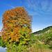 Herbstfarben -Colours of autumn
