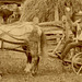 Horses, Cows, and Plows (Detail 3)