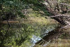 20150524 8121VRTw [F] Sumpf, Marais du Vigueirat, [Mas-Thibert] Camargue