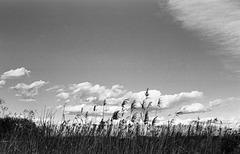 Weeds fields