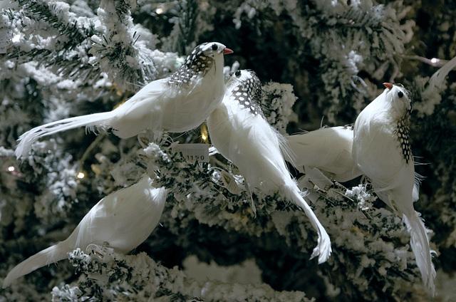 Oiseaux de Noël