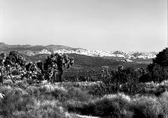 High Mojave Desert