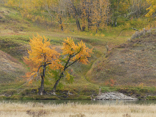 Along the Bow River in fall
