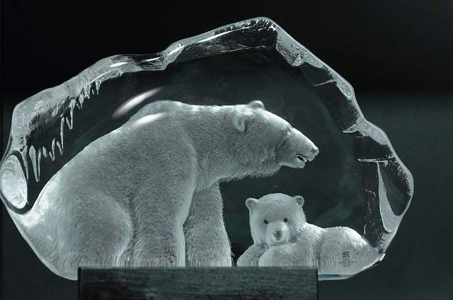 Pris dans les glaces
