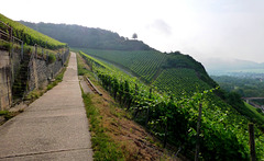 DE - Heimersheim - Hiking through the vineyards