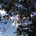 Feuillage et ciel bleu / Blue sky and foliage
