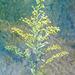 Wild Flower 042716-001 Flypaper Texture