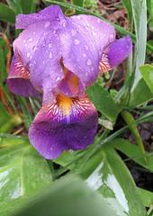 Jenny,  #8,  in the rain ..
