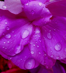 Un jour de pluie / A rainy day ...