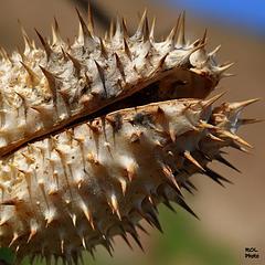 Nature ART...la bouche