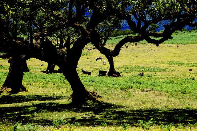 Die grünen Wiesen von Fanal