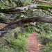Rabaçal und die 25 Quellen (03) - Abstieg zur Levada