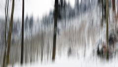et la forêt frissonne sous la neige : shiverings