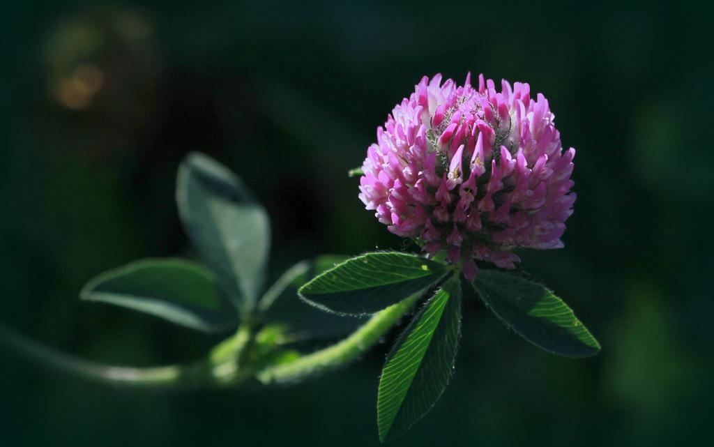 Une fleur par jour.... - Page 11 45340400.2665cdb9.1024
