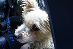 Ella on the road