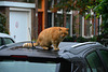 Cat on a wet car