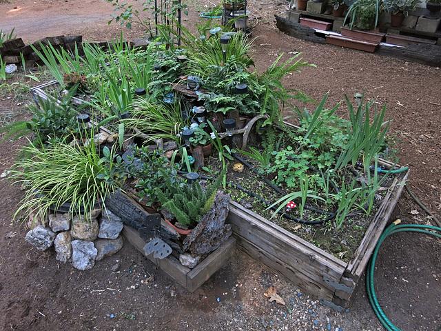 A Water-wise Garden (2966)