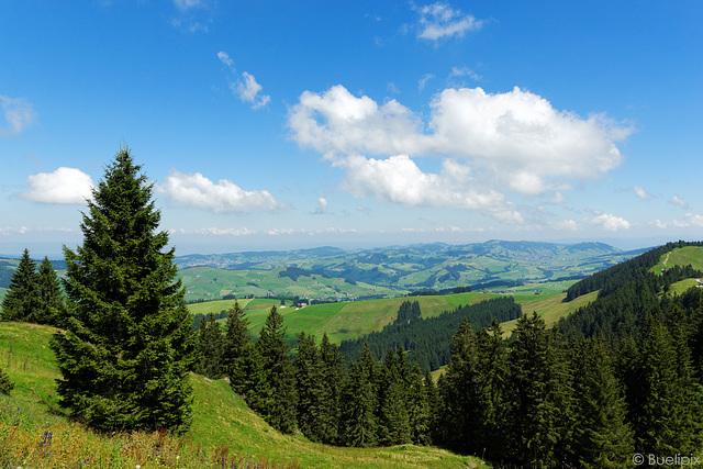aunterwegs am Kronberg (© Buelipix)