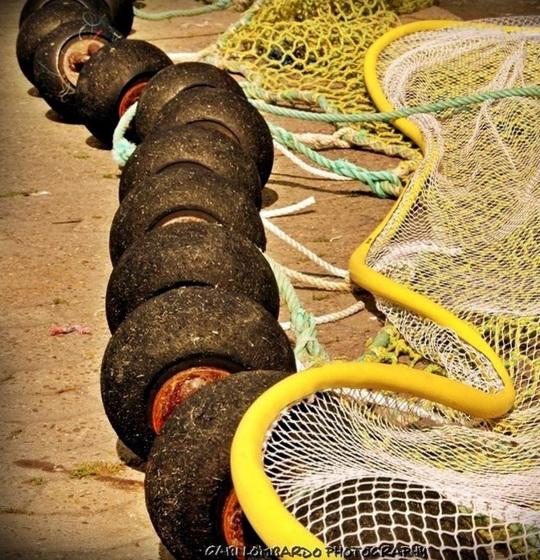 the yellow net