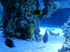 Meeresaquarium Zella-Mehlis