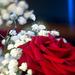 Rose et effets freelensing