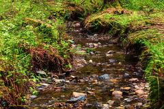 Ruisseau de printemps dans la forêt