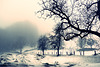 ... wandern im Nebel ...