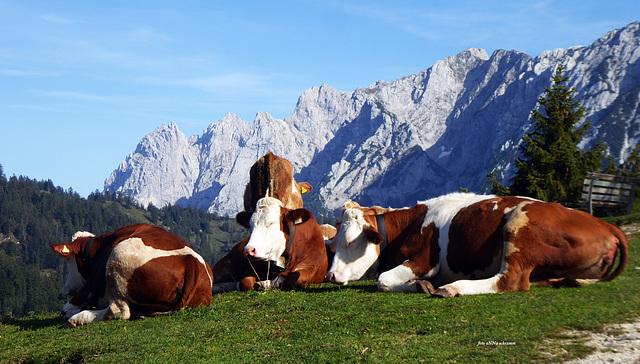 Brentenjoch (1.256m) Kaisergebirge, Tirol, Austria