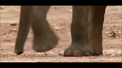 Le Cimetière Des Eléphants ***