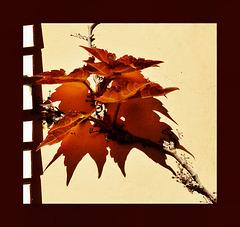 El color de la sombra del otoño