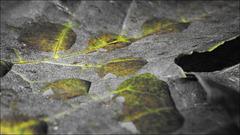 MM 2.0 - Laubblätter / Leaves