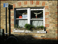 window of remembrance