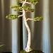 Melaleuca cuticularis