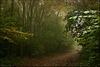 Forest Splendour