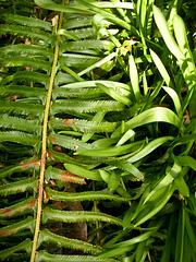 green - fern & leaf