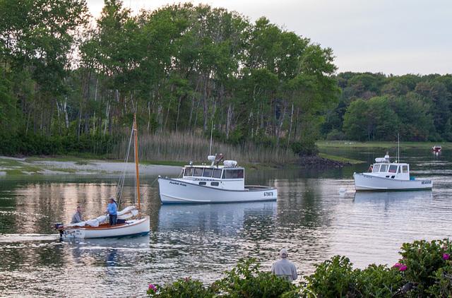 Maine evening 2